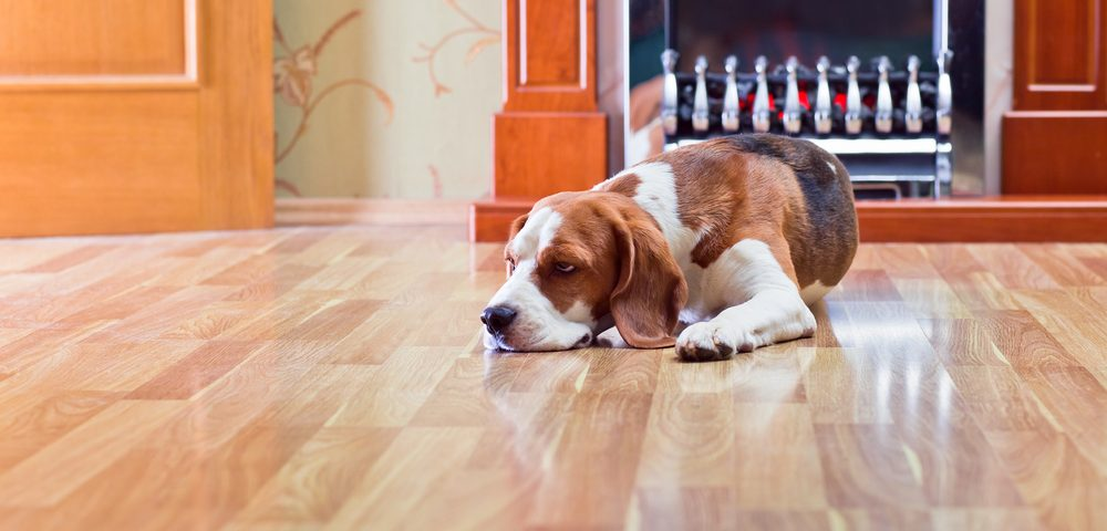 remove paint from laminate flooring
